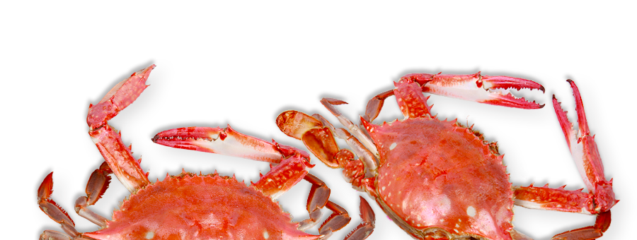 slider_crabs.png
